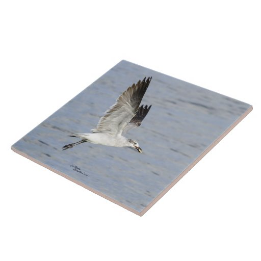 Teja del pájaro de la gaviota del vuelo