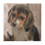 Teja del perrito del beagle