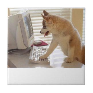 Teja del perrito del husky siberiano