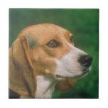 Teja del perro del beagle