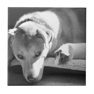 Teja del perro y del conejillo de Indias