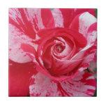 Teja del rosa rojo y blanco