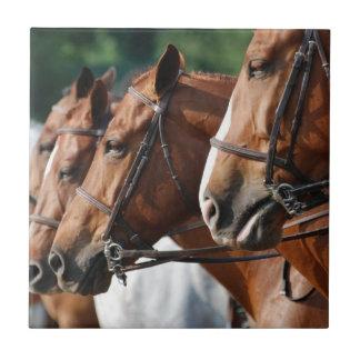Teja equina de la demostración del caballo