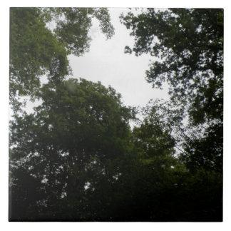 Teja espeluznante del bosque