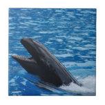 Teja falsa de la orca