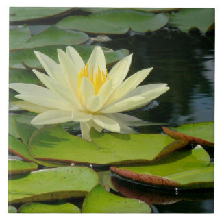 Teja/flor amarillo de Trivet Lotus (Photog)