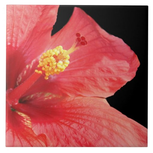 Teja floral decorativa del flor del hibisco