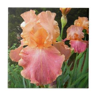 Teja floral del arte del iris del melocotón del BA