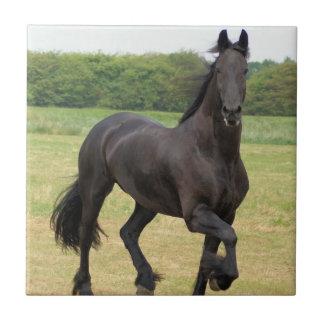 Teja frisia del caballo