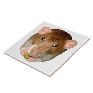 Teja hambrienta de la rata