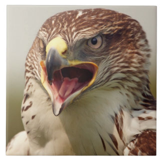 Teja hermosa/Trivet del halcón de Lanner