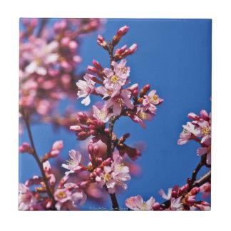 Teja japonesa azul conmovedora de las flores de ce