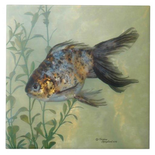 Teja magnífica del Goldfish del calicó de Ryukin