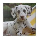 Teja o trivet hermosa dálmata del perro de perrito