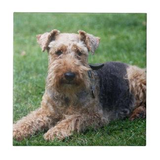 Teja o trivet hermosa de la foto del perro de Terr