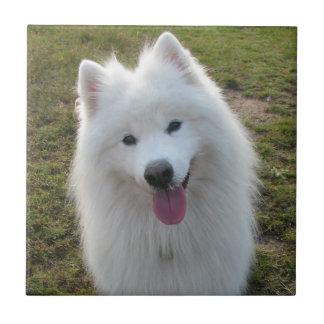 Teja o trivet hermosa de la foto del perro del sam