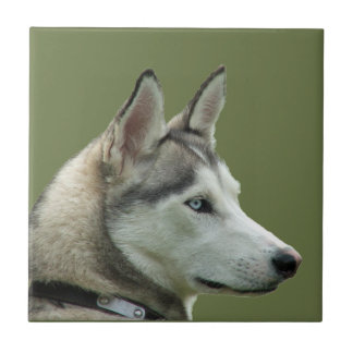 Teja o trivet hermosa de la foto del perro siberia