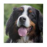 Teja o trivet hermosa del perro de montaña de Bern