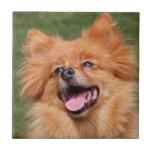 Teja o trivet hermosa, idea del perro de Pomerania