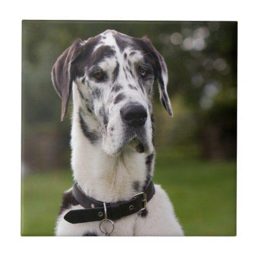 Teja o trivet hermosa, regalo del perro de great d