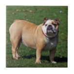 Teja o trivet hermosa, regalo del perro inglés del