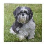 Teja o trivet linda hermosa de la foto del perro d