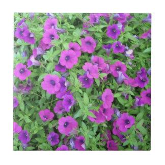 Teja púrpura de las petunias