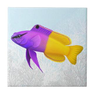 Teja real de los pescados del arrecife de coral de