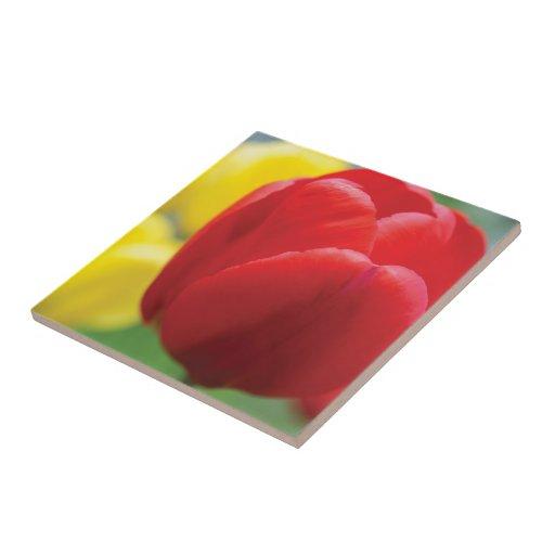 Teja roja y amarilla de los tulipanes