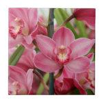 Teja rosada de la orquídea