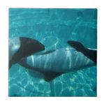Teja subacuática de las ballenas