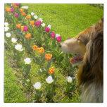 Teja Trivet de los tulipanes del collie N del Sabl