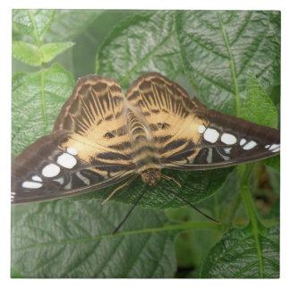 Teja tropical bonita de la mariposa de las podador