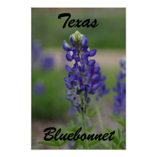 Tejas, Bluebonnet Poster