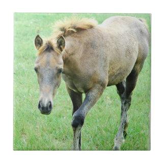 Tejas meladas de itinerancia o Trivets del caballo