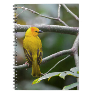 Tejedor de oro de la palma spiral notebooks