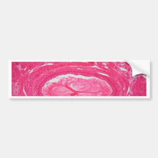 Tejido del ovario debajo del microscopio pegatina para auto
