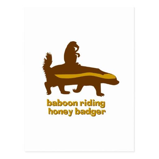 Tejón de miel del montar a caballo del babuino postal