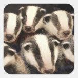 Tejón lindo Cubs Pegatina Cuadrada