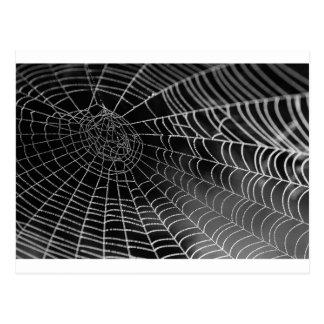 Tela de araña con las gotas del agua tarjeta postal