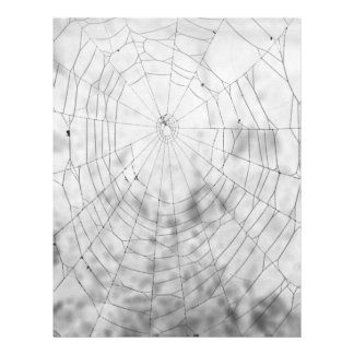 """Tela de araña folleto 8.5"""" x 11"""""""