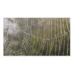 Telaraña de la araña plantillas de tarjetas personales