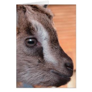 Televisión de observación de la cabra tarjeta