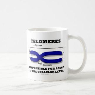 Telomeres responsable del envejecer en el nivel ce tazas de café