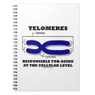 Telomeres responsable del envejecer en el nivel libretas espirales