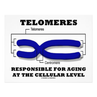 "Telomeres responsable del envejecer en el nivel folleto 8.5"" x 11"""