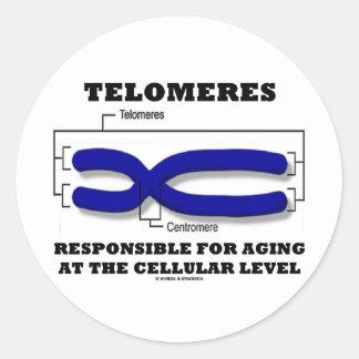 Telomeres responsable del envejecer en el nivel etiqueta redonda