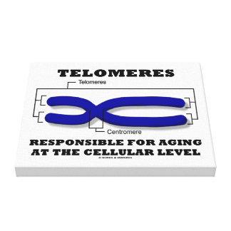 Telomeres Responsible For Aging At Cellular Level Canvas Print