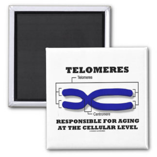 Telomeres Responsible For Aging At Cellular Level 2 Inch Square Magnet