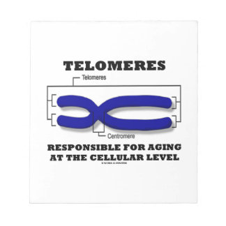 Telomeres Responsible For Aging At Cellular Level Notepad